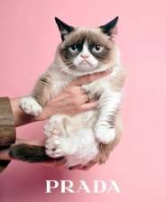 Grumpy Cat for Prada